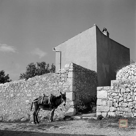 Milan Pavic, HARMONIJA Cres C43, 1955-59