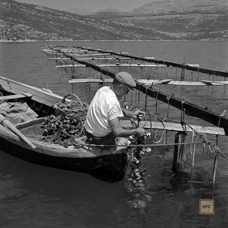 Milan Pavic, KAMENICE STON 75, 1955-59
